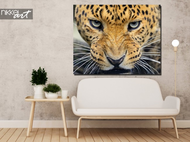 foto op aluminium luipaard